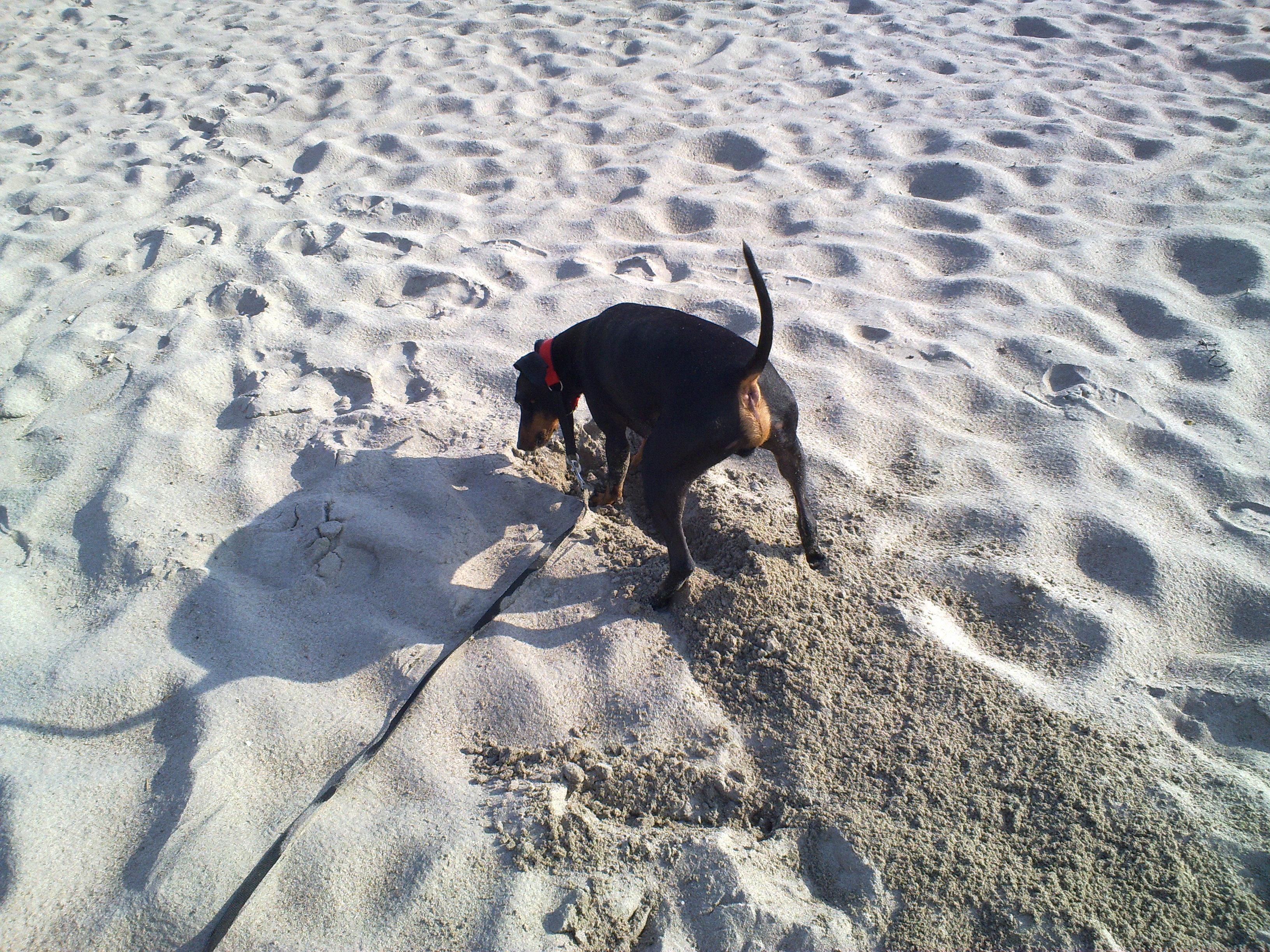Artig å grave litt på stranden!
